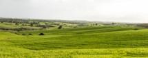 תמונה של שדות ירוקים | תמונות