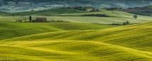 תמונה של מרבדים ירוקים | תמונות