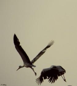 לעוף בשניים