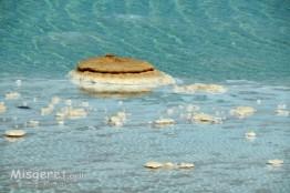 פטריות מלח