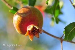 מלכת הפירות