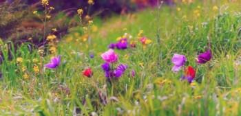 פרחי בר