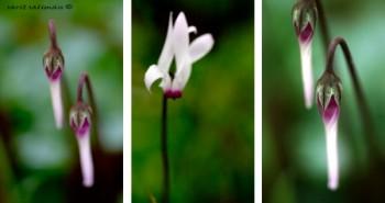 Triptych3