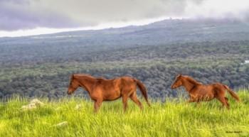 סיפור סוסים