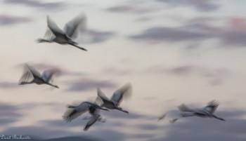 מעוף העגורים