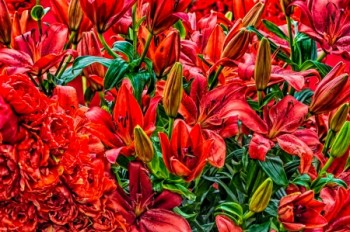 פרחים אדומים בהרכב