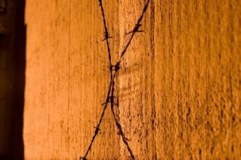 גדר תיל