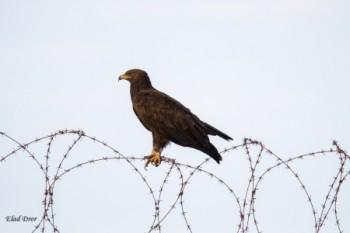 עומד על הגדר