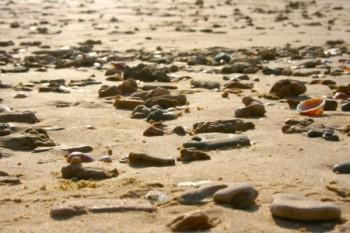 קישוטי החוף