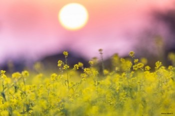 שקיעה צהובה