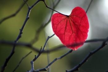 לב הסתיו
