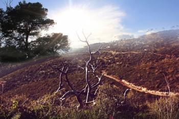 יערות הכרמל