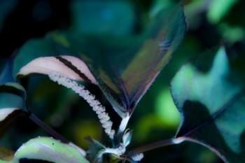 פרח זרחני