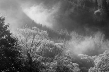 עצים בענן