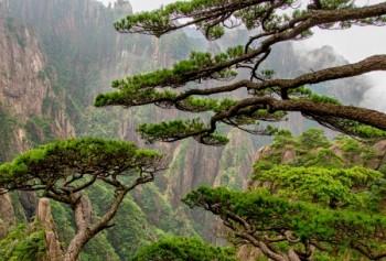 ההר הצהוב - Huangshan
