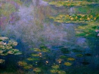 חבצלות מים water lillies
