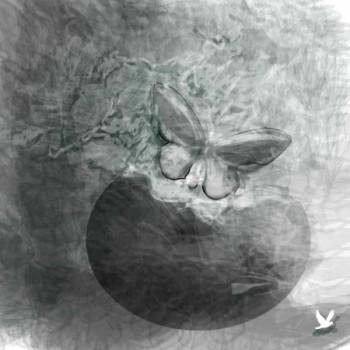כד ופרפר