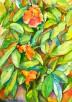 פרחי רימון