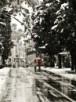 הליכה בשלג