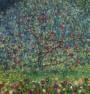 תמונה של Apple tree עץ תפוחים | תמונות