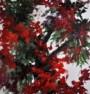 תמונה של אדום עז   תמונות