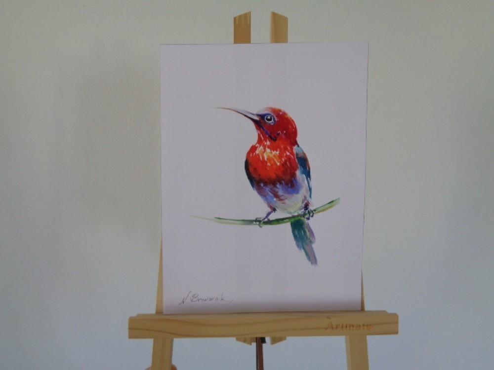 COLOR BIRD