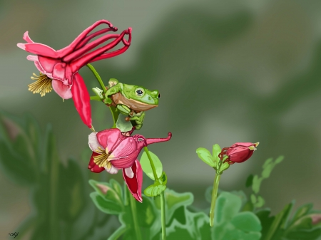 צפרדע על פרח