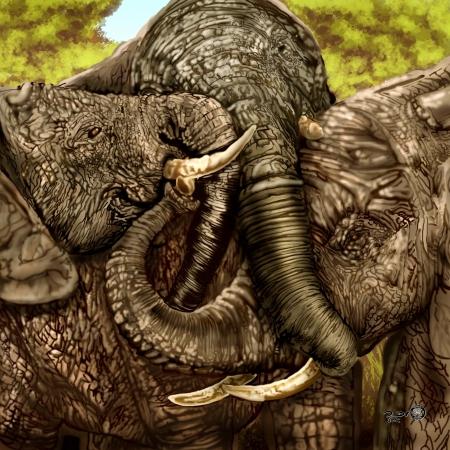 משפחת פילים