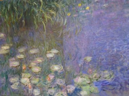 חבצלות מים  water lilies