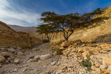 wadi Zohar