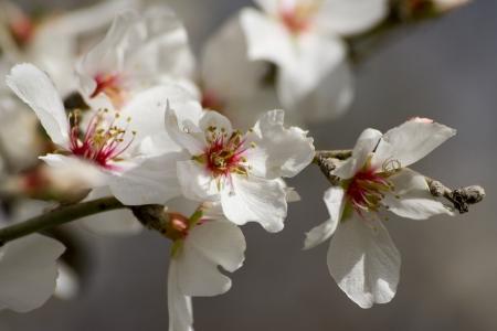 פריחה אביבית
