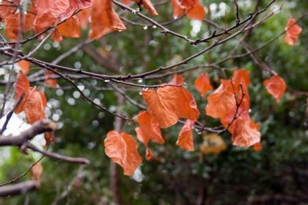 העלים האחרונים