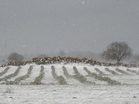 פתיתי שלג