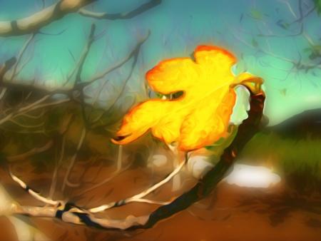 עלה צהוב