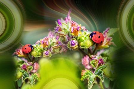 גשר הפרחים של החיפושיות