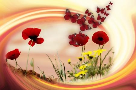 שדות ופרפרים
