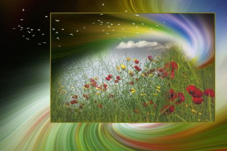 שדה פרחי הבר