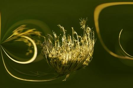 פרח בר מיוחד
