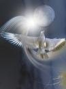 ציפור וירח
