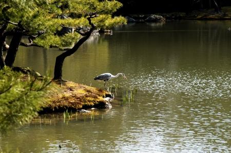 דייג בעל כנפיים