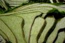 טרסות אורז סין
