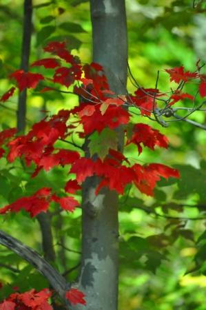 צבע בטבע