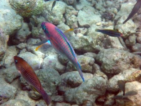 עפים מתחת למים