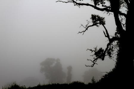 עץ בערפל