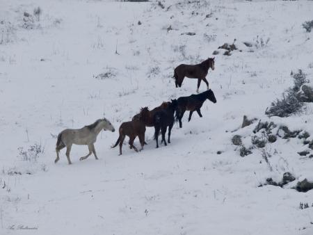 סוסים בשלג  2