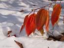 שלכת בשלג