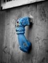 הנוקש הכחול