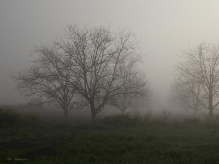 ערפילי בוקר