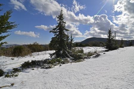 שלג עד לאופק