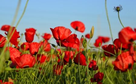בשדה אדום